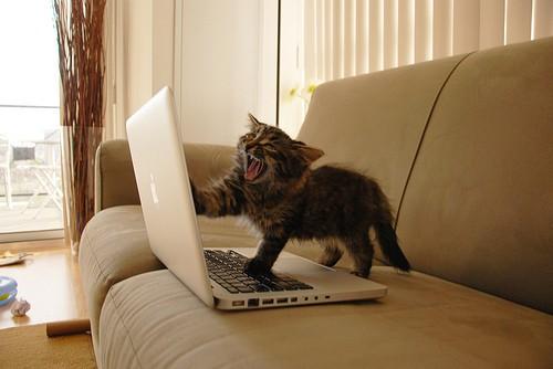 kitten-laptop